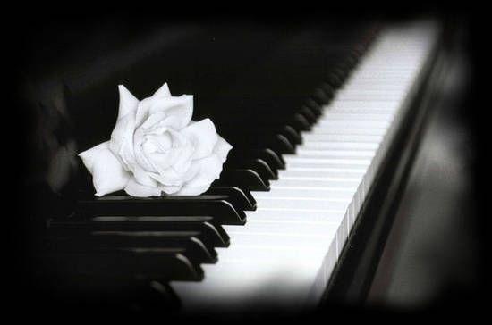 White Rose on Piano ... | Pianoforte, Strumenti musicali ...