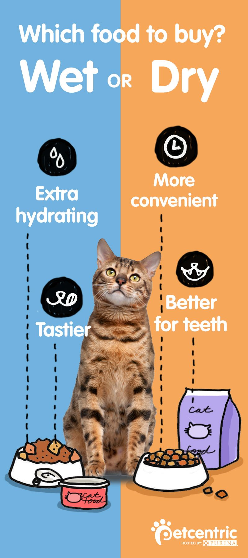 Wet Vs Dry What S The Best Food For My Cat Best Cat Food Healthy Cat Food Dry Cat Food