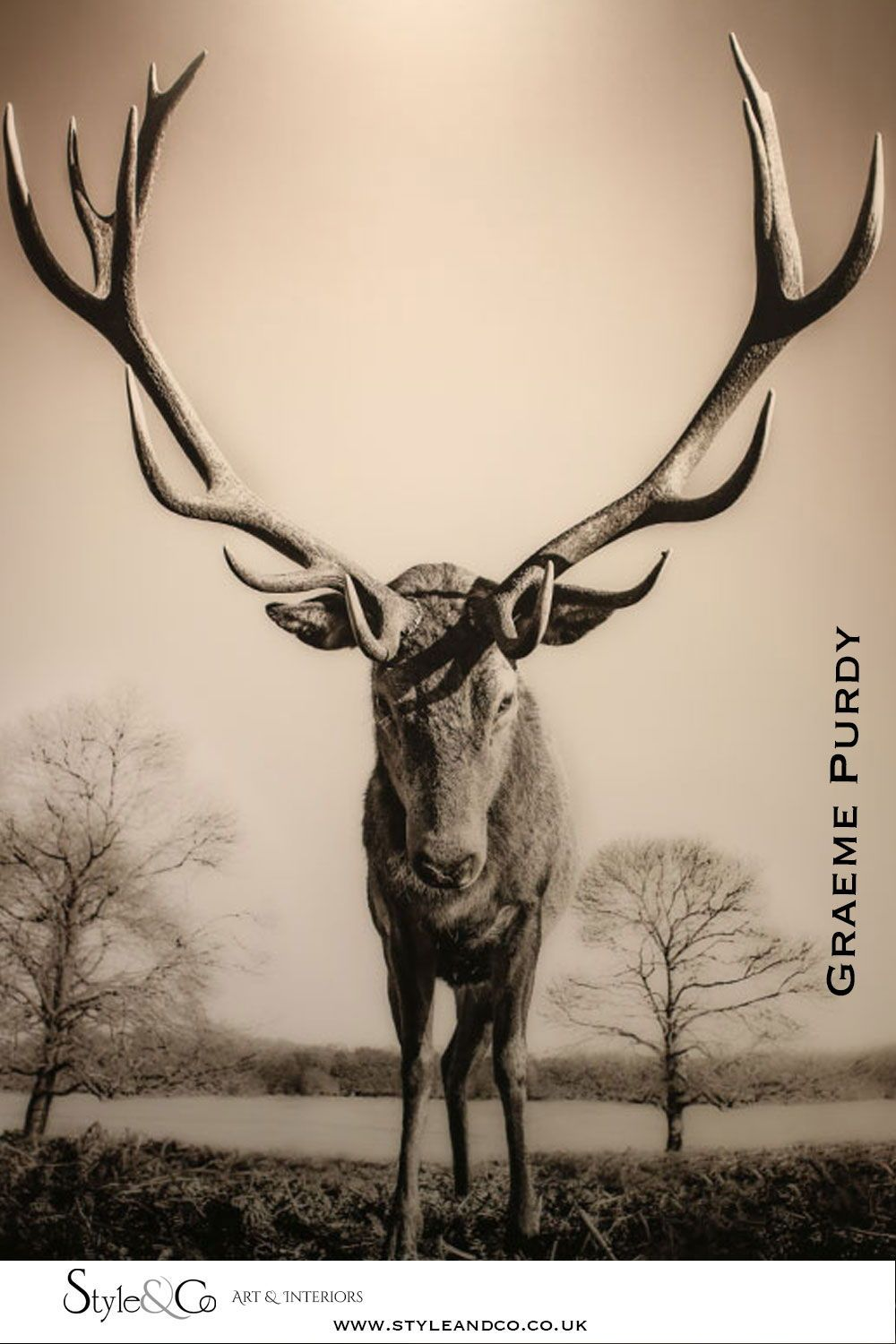 See photography by Graeme Purdy  and many other great artists at the London Art Fair.  Visit the Blog at www.styleandco.co.uk/london-art-fair  #fineart #photography #animal #prints #contemporaryart #art #londonartfair #styleandco #stag #homedecor
