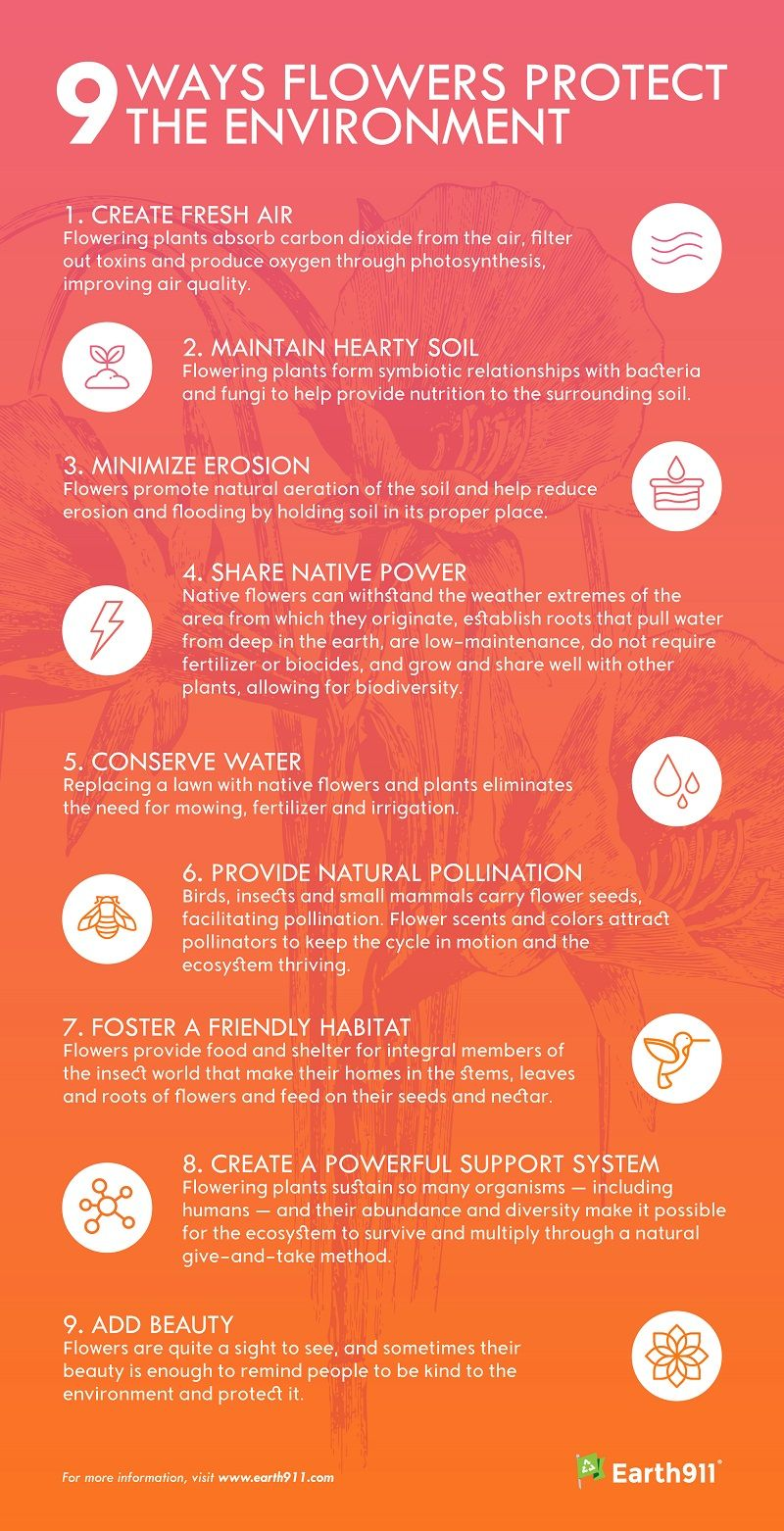 Infographic: 9 Ways Flowers Protect the Environment - Earth911.com