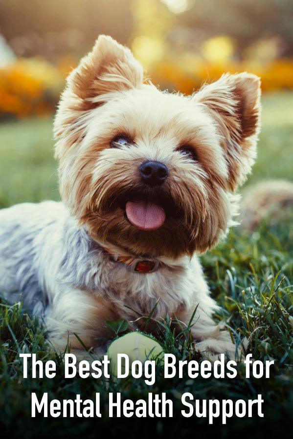 The Best Emotional Support Dog Breeds Service dogs