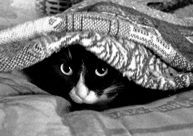 Leia peeking out from the safety of her blanket cave. Photo by Sunny Clark - All rights reserved.