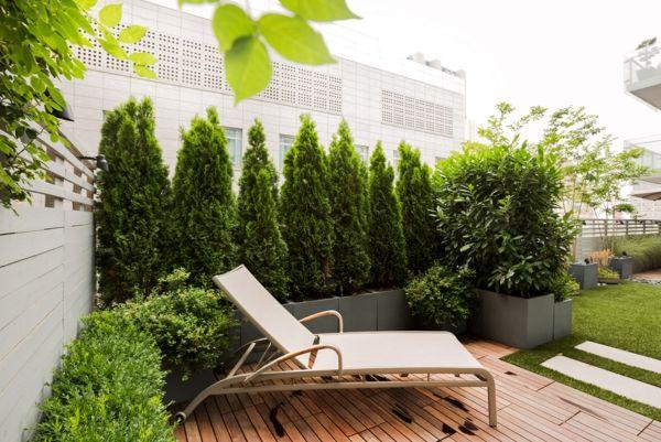 immergrüne pflanzen lebedige sichtschutz für terrasse | garten, Terrassen ideen