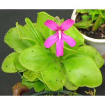 Page Not Found Johnstown Garden Centre Plants Insectivorous Plant Carnivorous Plants
