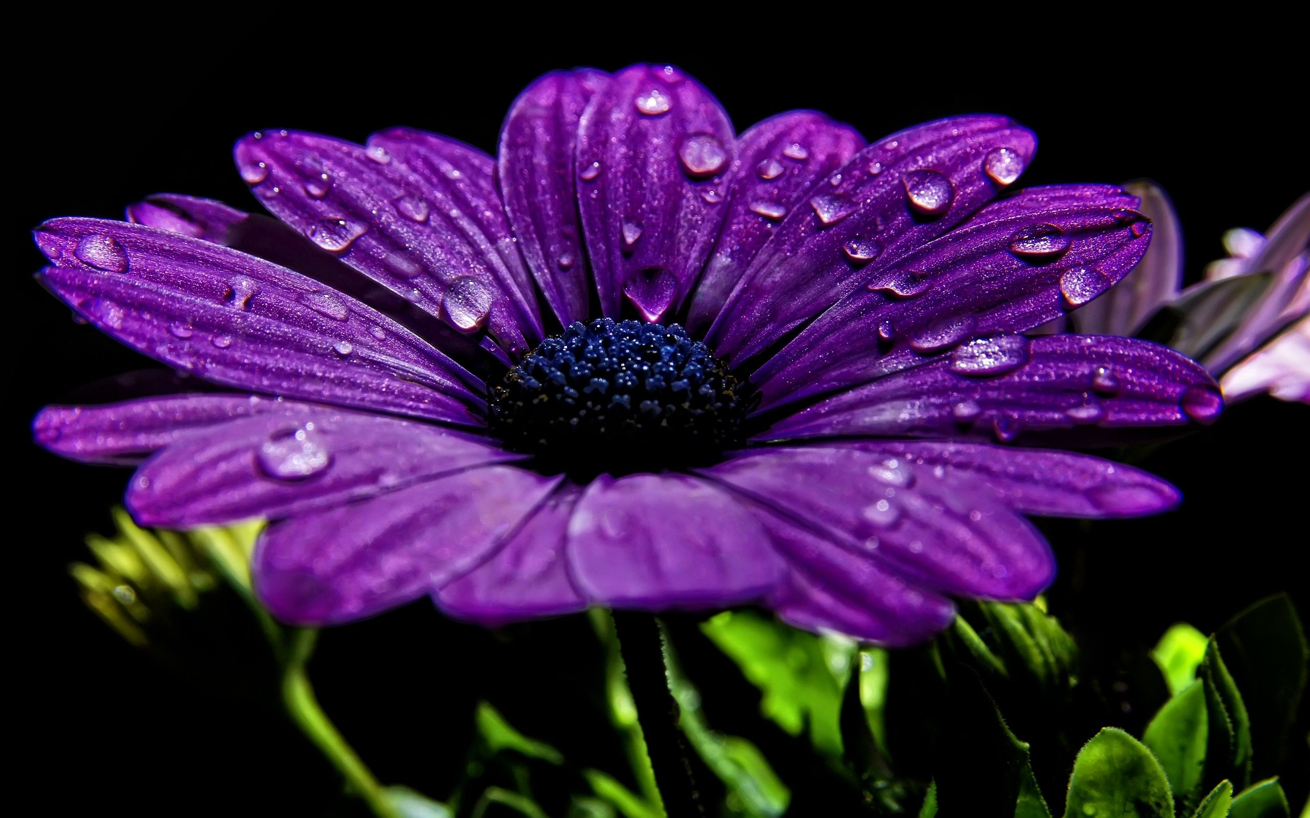 Nature Flowers Water Drops Macro Hd Wallpaper Places To Visit