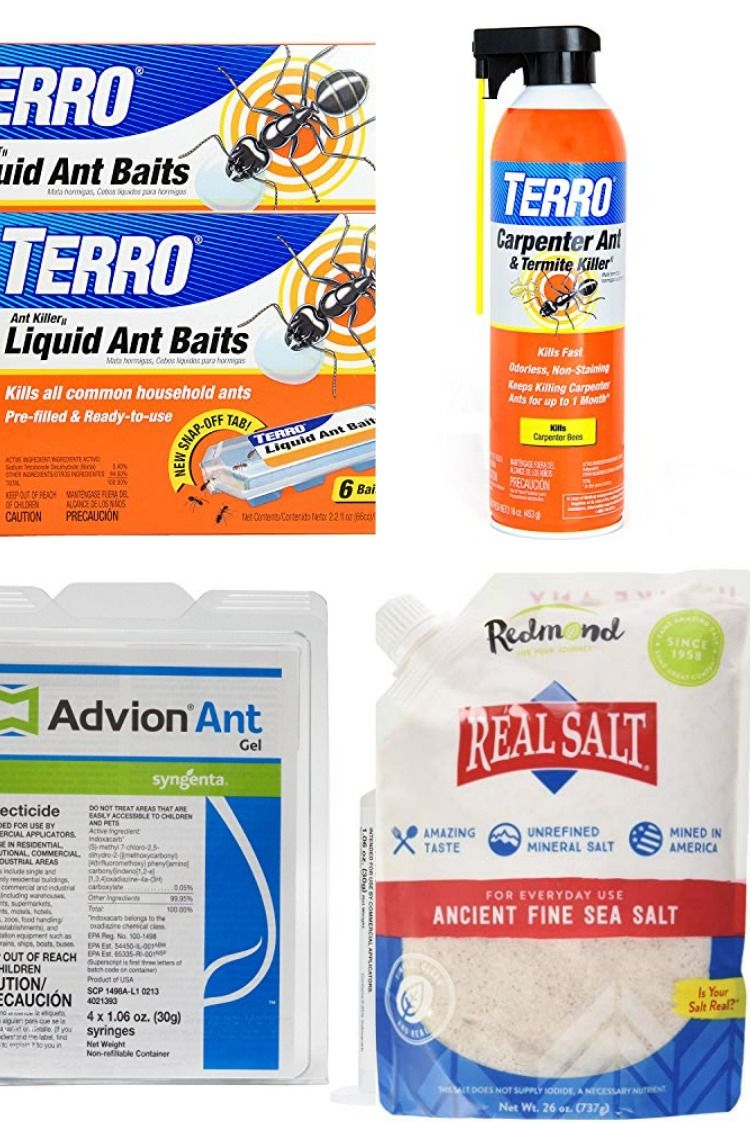 How To Get Rid Of Ants In Your Car Ants can be a nuisance