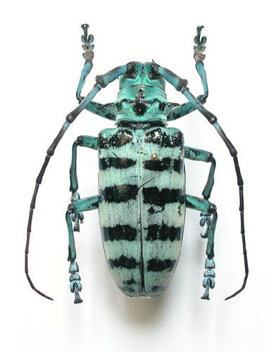 Le cabinet de curiosites deyrolle taxidermie entomologie curiosit s naturelles - Le cabinet de curiosites ...