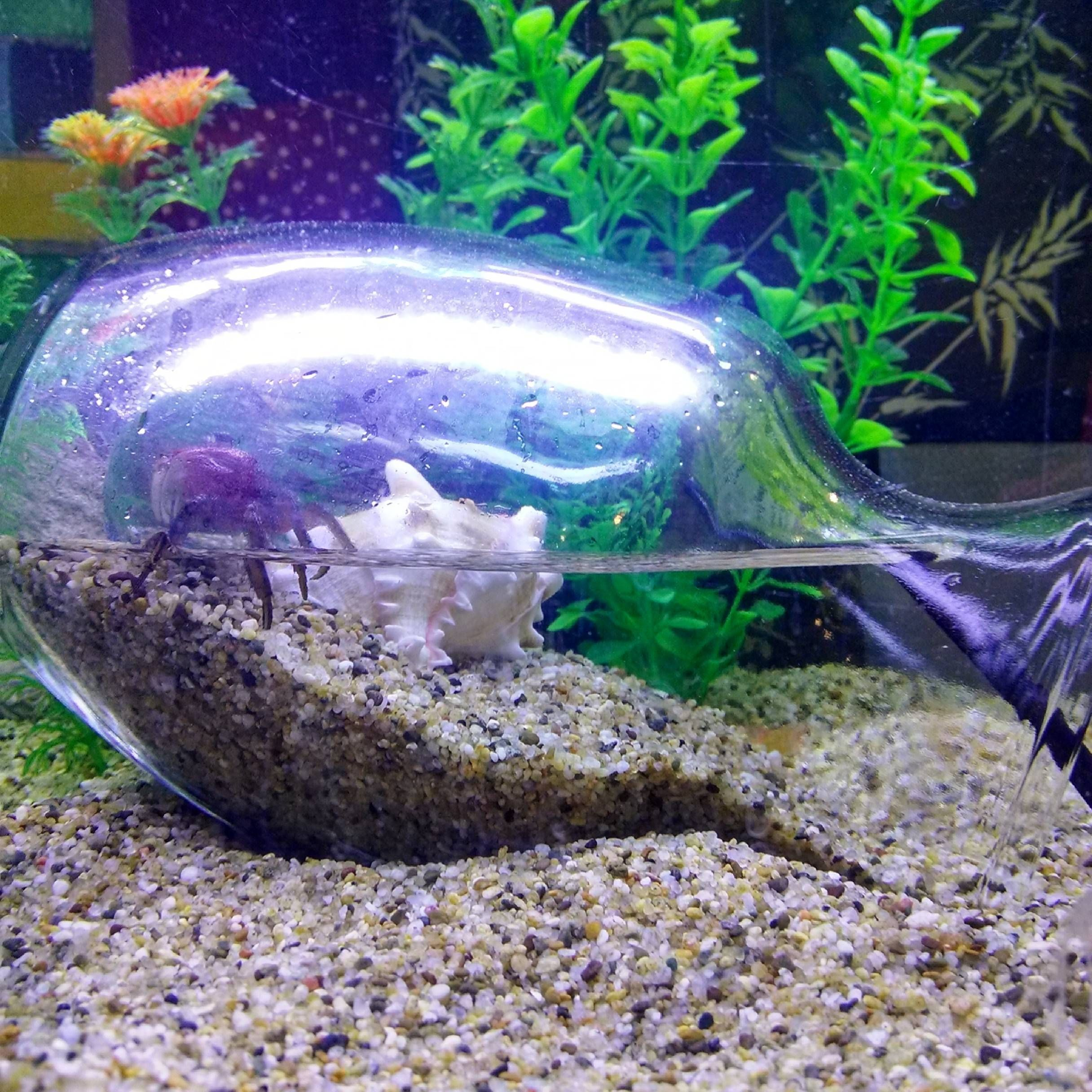 Underwater Beach Betta Fish Tank Fish Tank Themes Aquarium