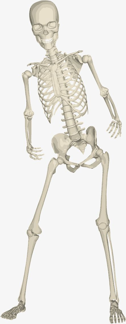 Human skull PNG and Vector