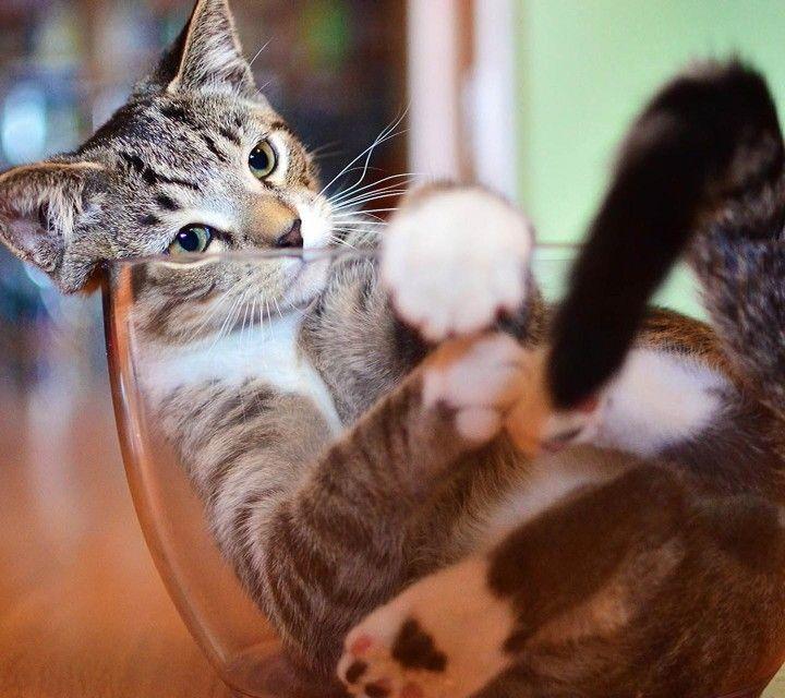 Cat In Vase Animals Pinterest Cat And Animal