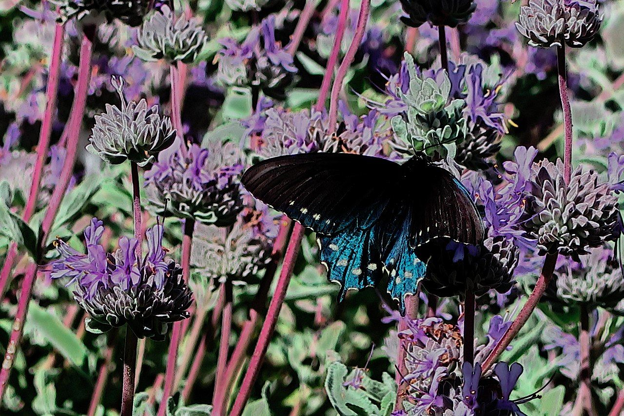 5 Essential Nectar Source Plants for the Florida Butterfly ...