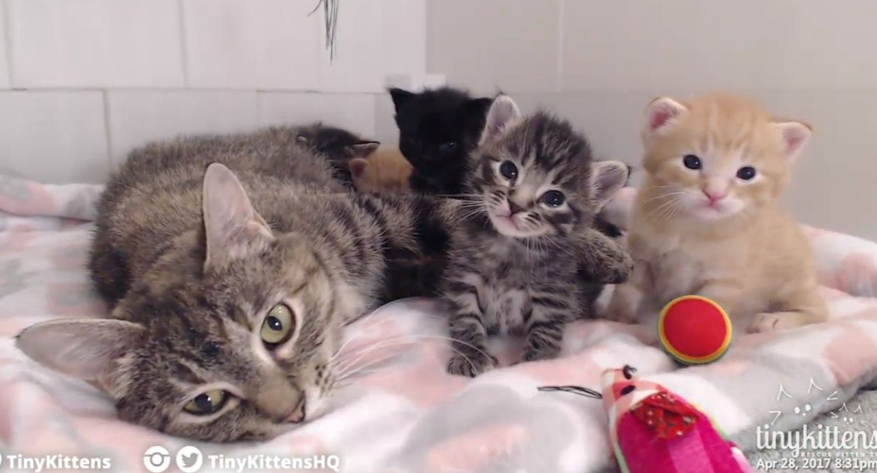 TinyKittens live web cam This is Corsica and her babies