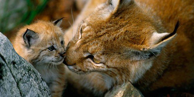Biologische Vielfalt In Deutschland With Images Wild Cats Pet Blog Cute Animals