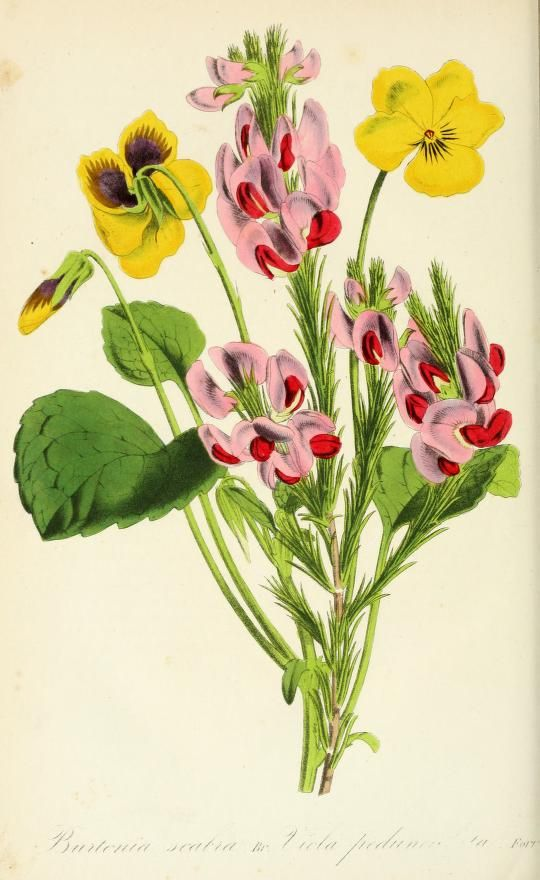 1857 - L'Horticulteur practicien; - Biodiversity Heritage Library