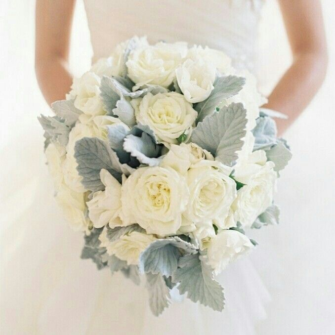 Ultra Dreamy Bridal Bouquet Showcasing White English Garden Roses Flat Leaf Dusty Miller