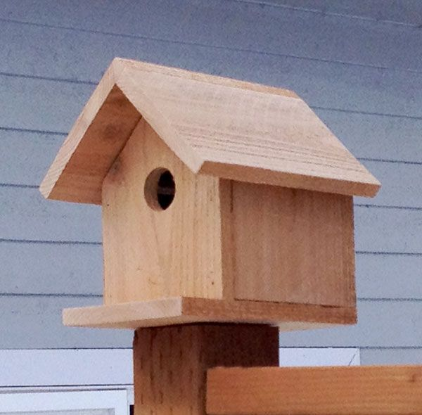 ana white build a kids kit project 2 birdhouse free On simple birdhouses