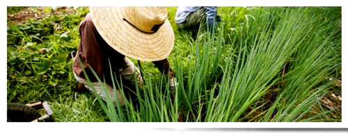 Fertilizers, pesticides, insecticides are some of the major things which should be highly taken care of at the time of plantation.  Farmers must ensure that the fertilizer or the insecticides and pesticides which they are getting must have the capacity or the capability of prodding one of the finest and healthiest crops. #Crop_Fertilizer_Supplier_Indiana
