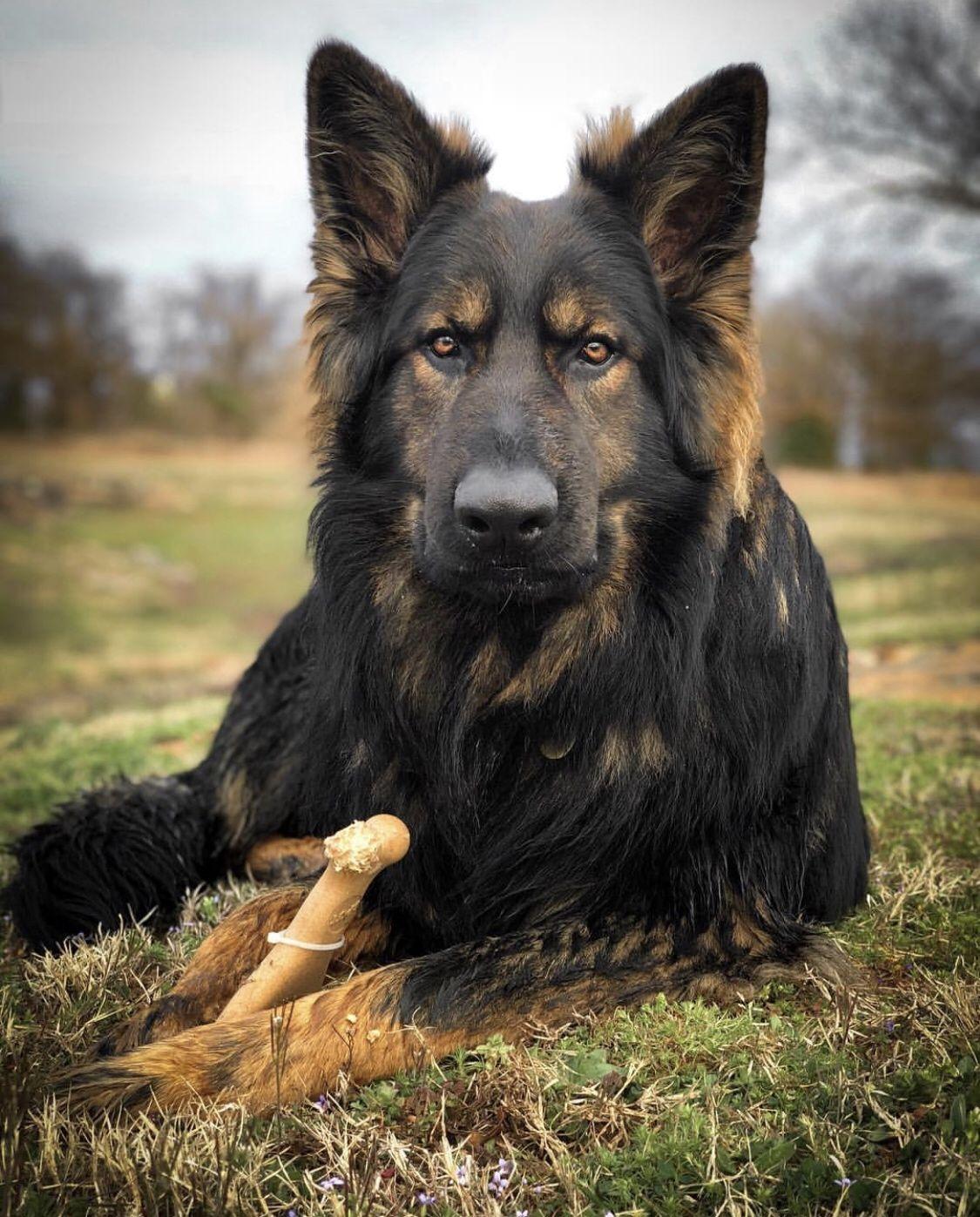 Pin By Lara Younes On G4p Photoshoot Lion Dog German