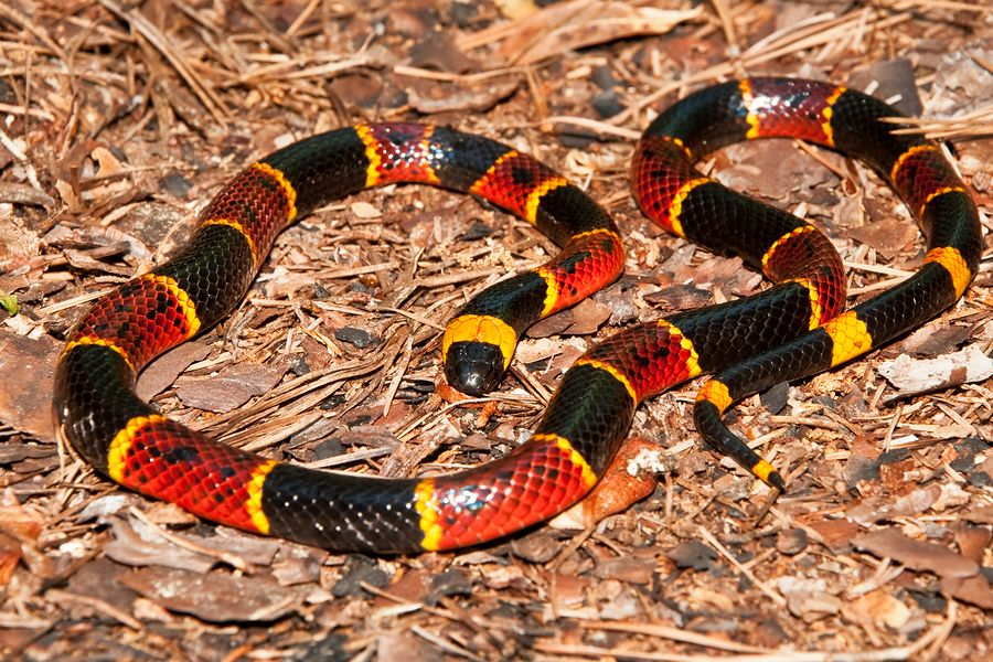 d0536635b2f Learn how to identify snakes with our helpful tips