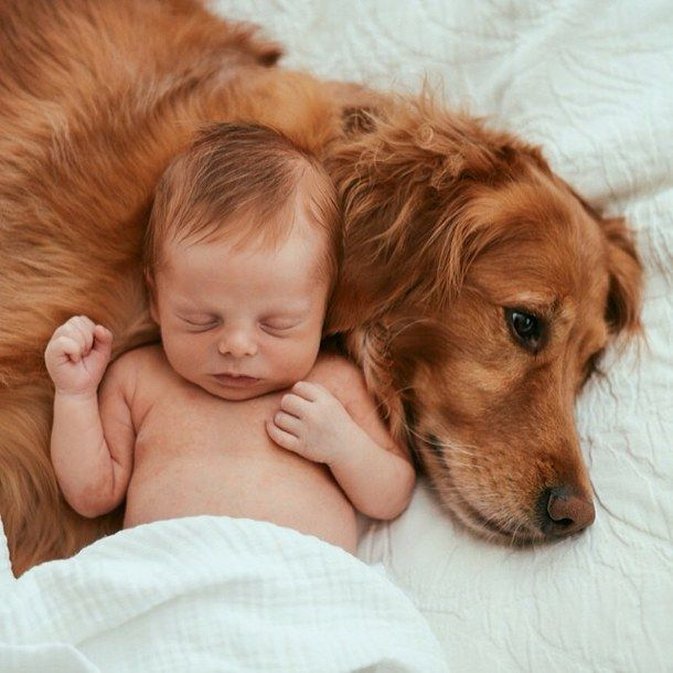Children with animals love golden redhead babies pets newborn
