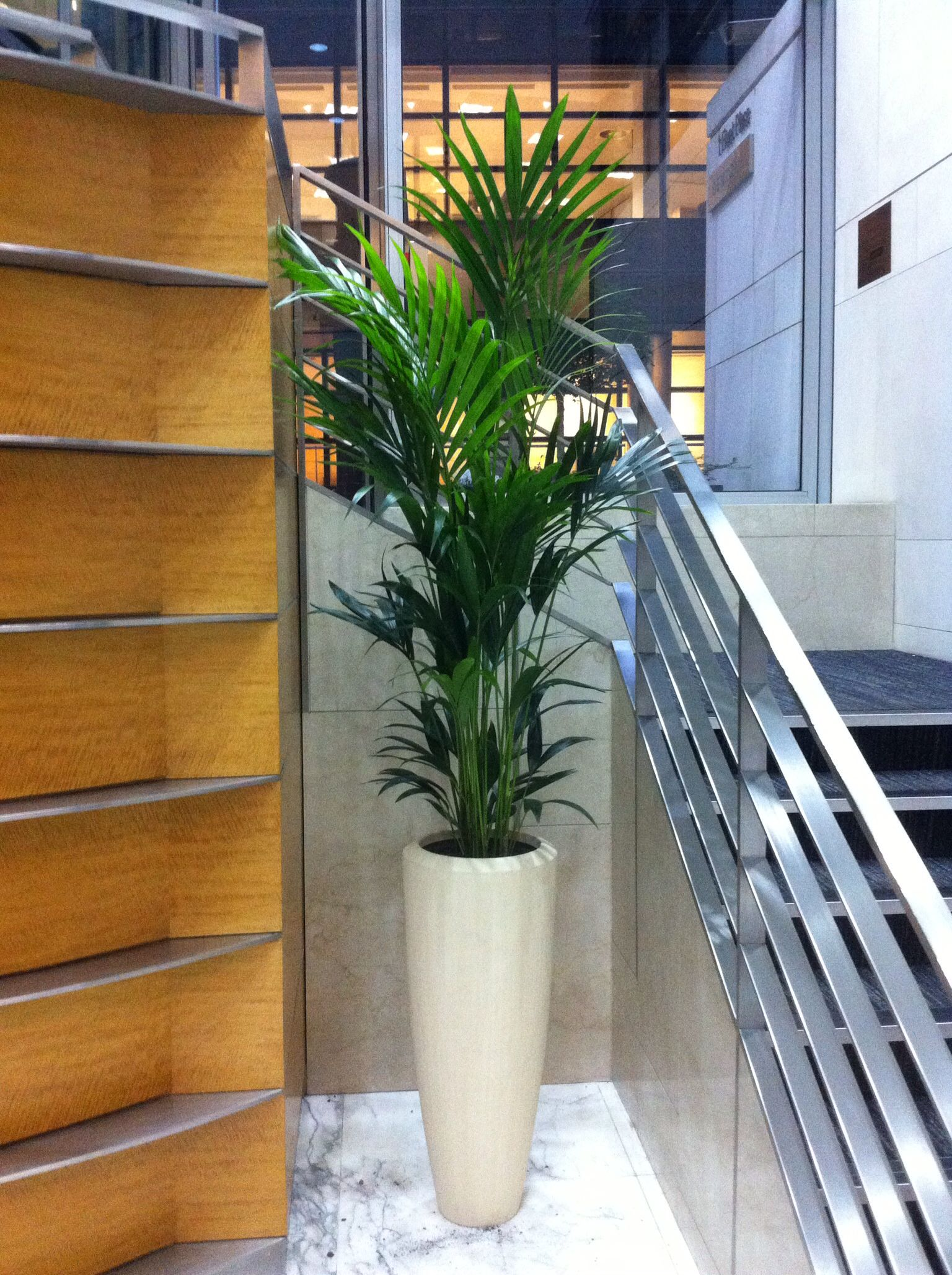 kentia palm planted in tall circular poly stone container gef ssbepflanzungen im innenbereich. Black Bedroom Furniture Sets. Home Design Ideas