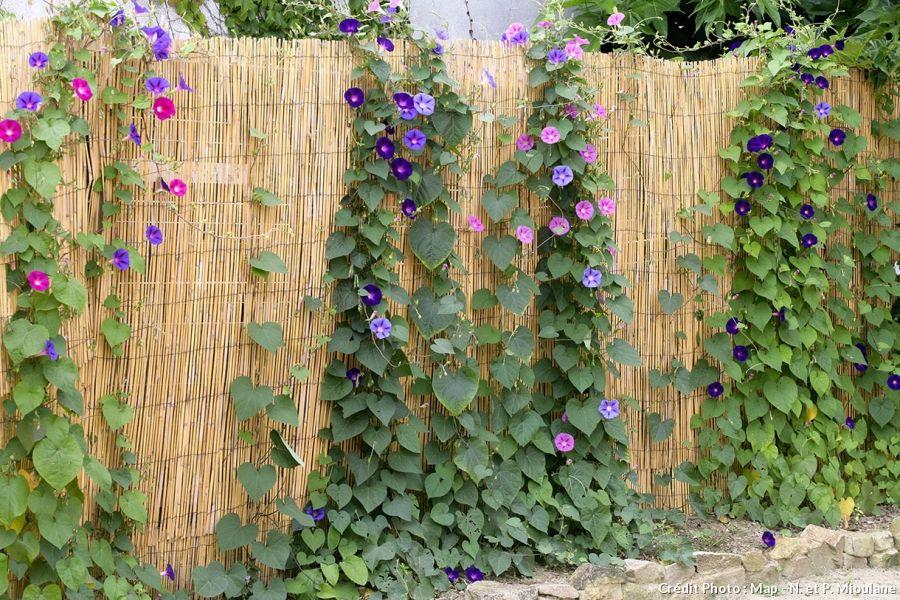 11 idées de brise-vue pour être tranquille au jardin | Pinterest ...