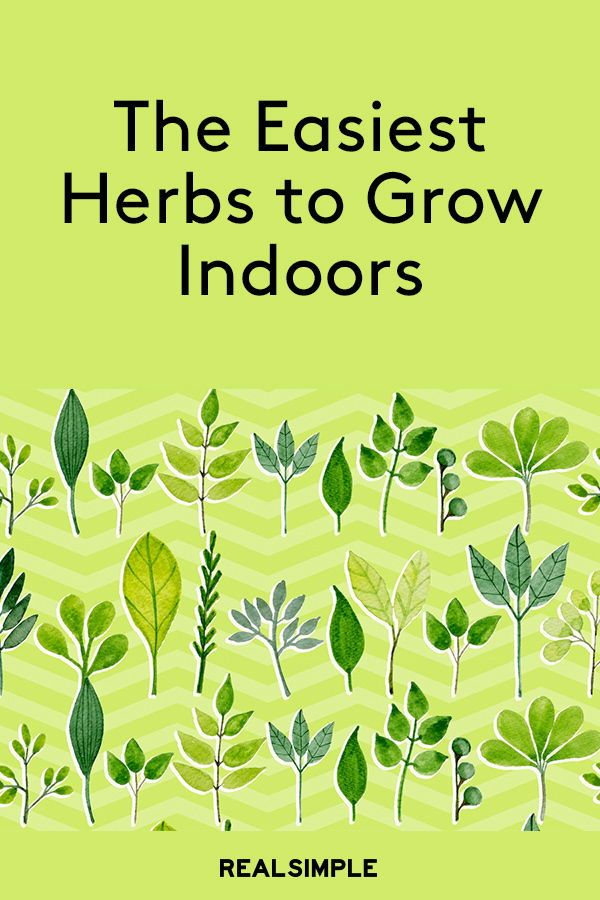 The Easiest Herbs To Grow Indoors Easy Herbs To Grow 640 x 480