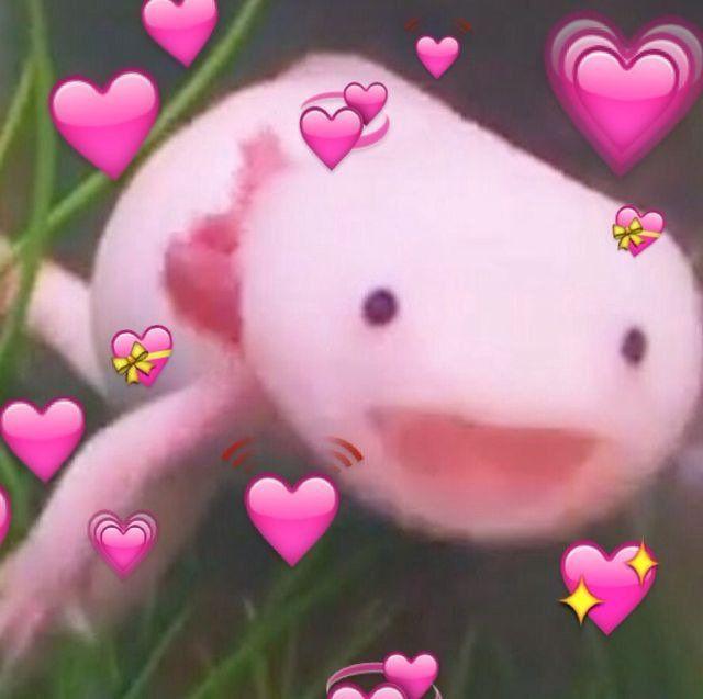 Got7 Pics Busqueda De Twitter Cute Love Memes Cute Memes Wholesome Memes