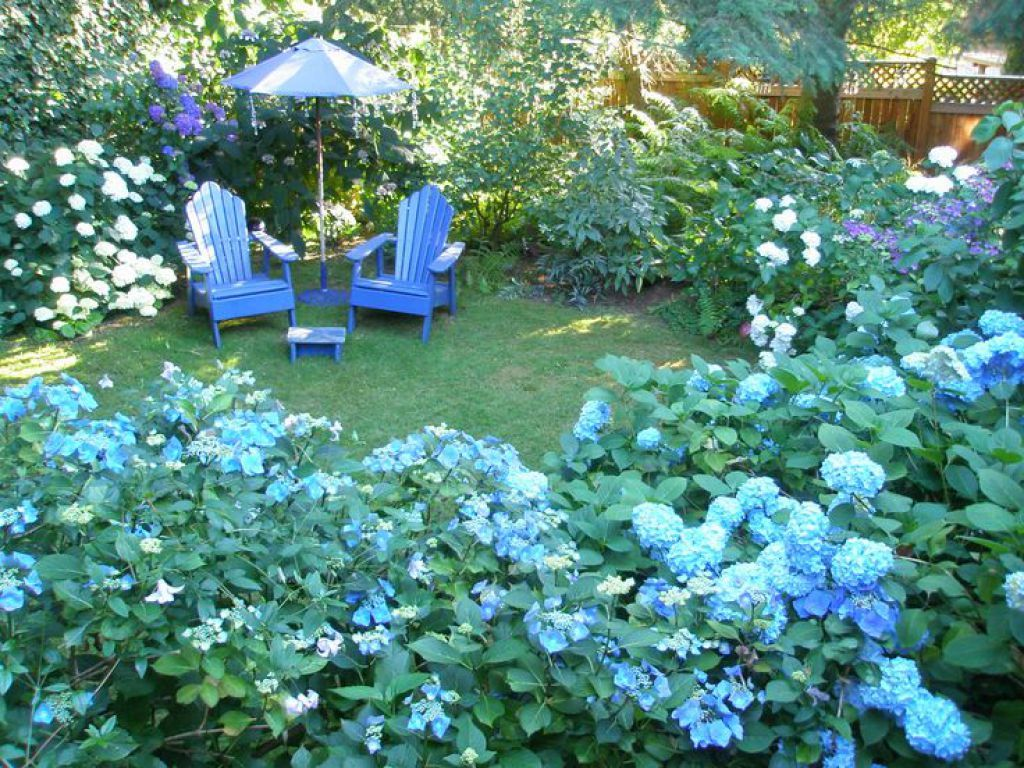 Garden With Blue Hydrangeas And Adirondack Chairs