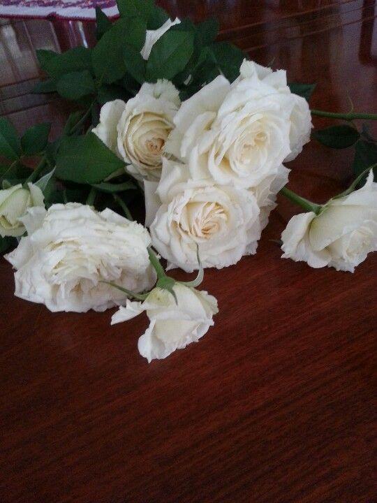my white roses