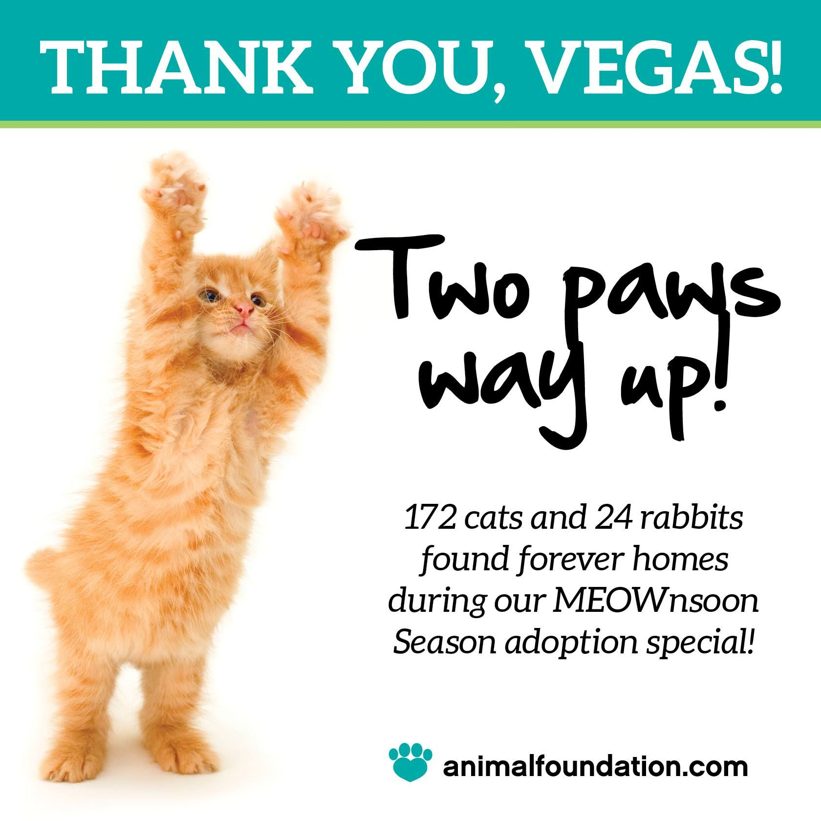 TWO PAWS UP, VEGAS! Thanks to YOUR support, 172 cats and