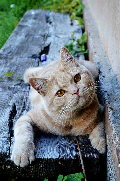 Cats おしゃれまとめの人気アイデア Pinterest Galan Graphix キュートな猫 子猫