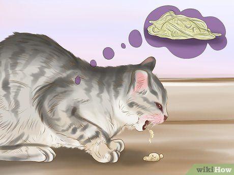 Katzen Entwurmen Katzen Katzen Infos Und Katzen Verhalten