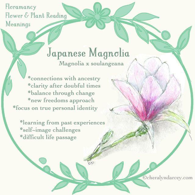 Magnolias Meadow And Garden Flower Meanings Garden Magnolia Flower