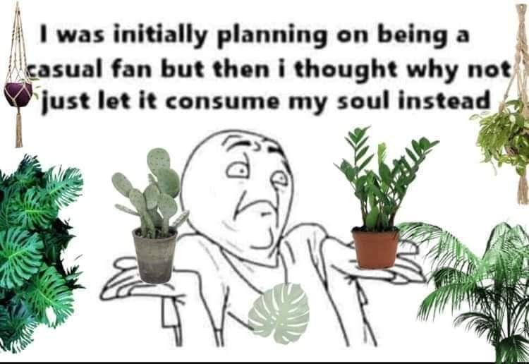Pin By Jeannie Almonte On Plants In 2020 Plant Jokes Plants Plant Lady