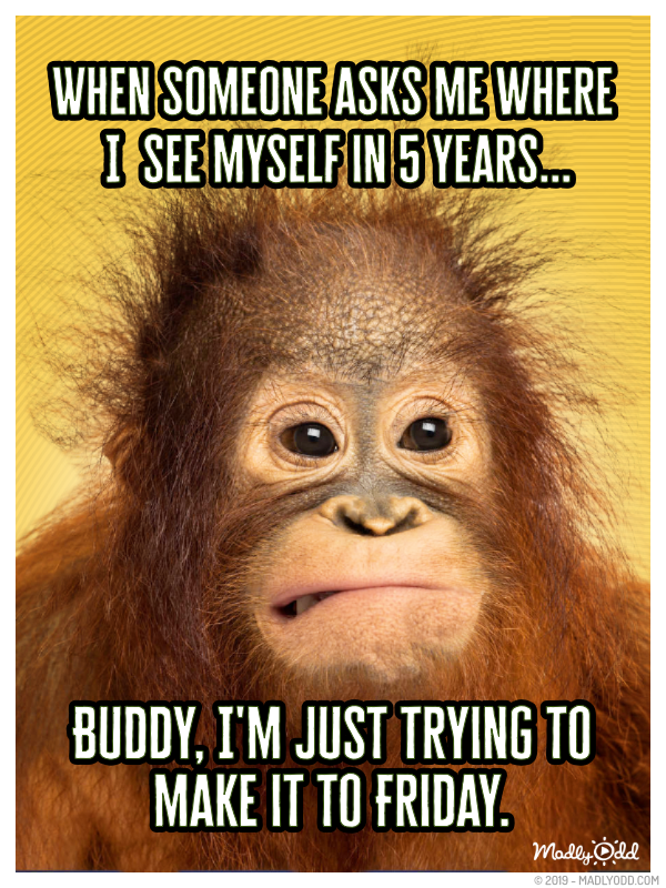 Where Do You See Yourself In 5 Years Funny Monkey Memes Funny Friday Memes Funny Quotes