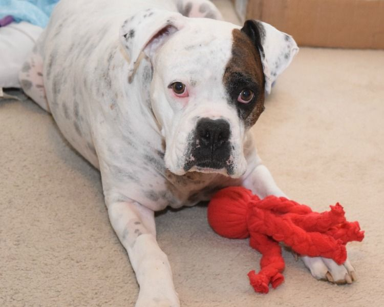 Make This Easy Diy Dog Toy Feed Your Dog