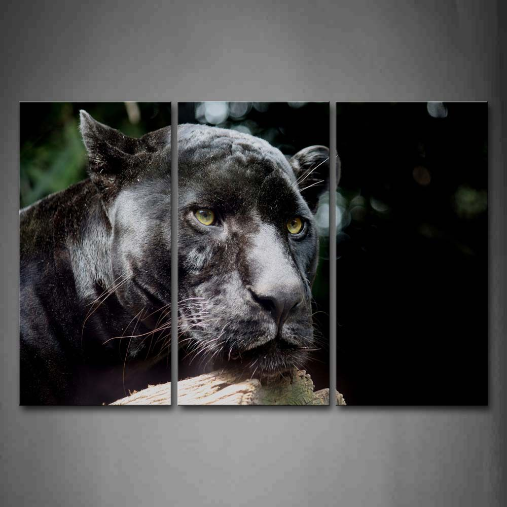 Jaguar Growling Panther Canvas Art Print By: Framed Wall Art Pictures Panther Wood Canvas Print Animal