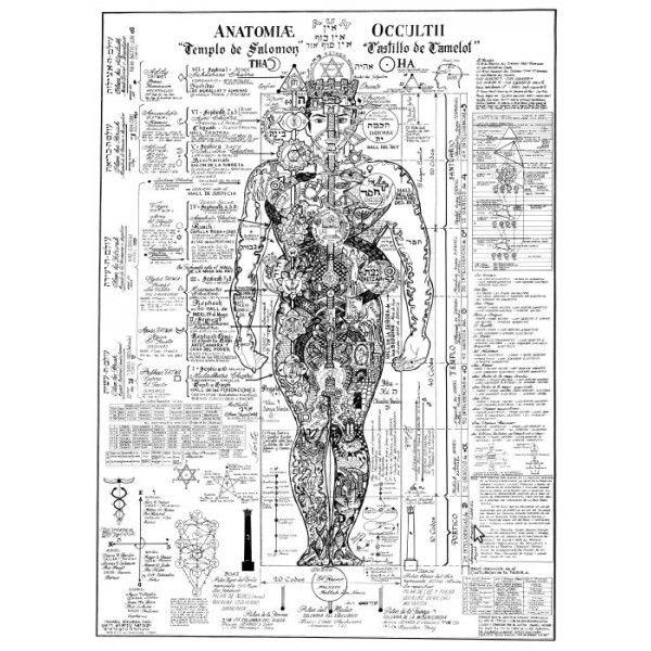 La Anatomía Oculta del Hombre - Ismael Noguera | yoga | Pinterest ...