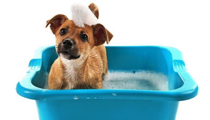 How To Make Dog Shampoo At Home Guide And Tips Bathing A Puppy