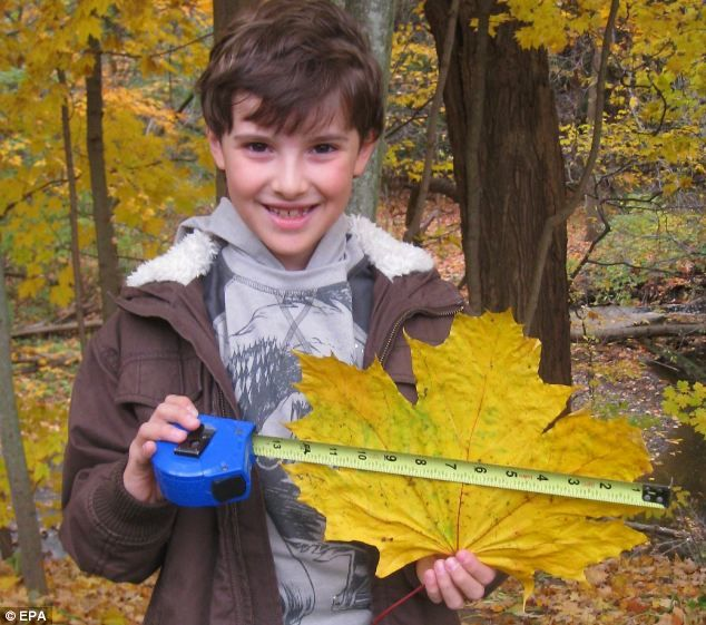 Leafing through the record books:  Nine-year-old Joseph Donato with the largest…