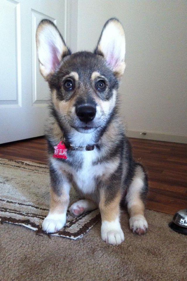 I want!! Dog friends, Dog love