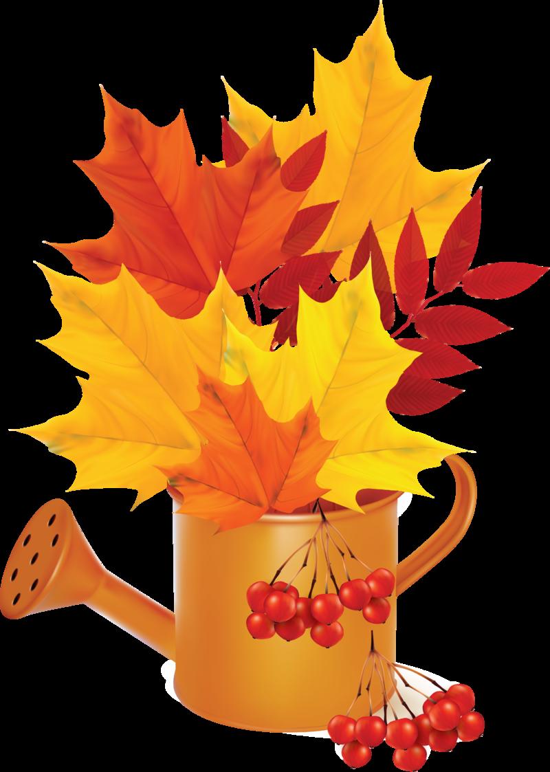 Картинки осенние листья для детского сада