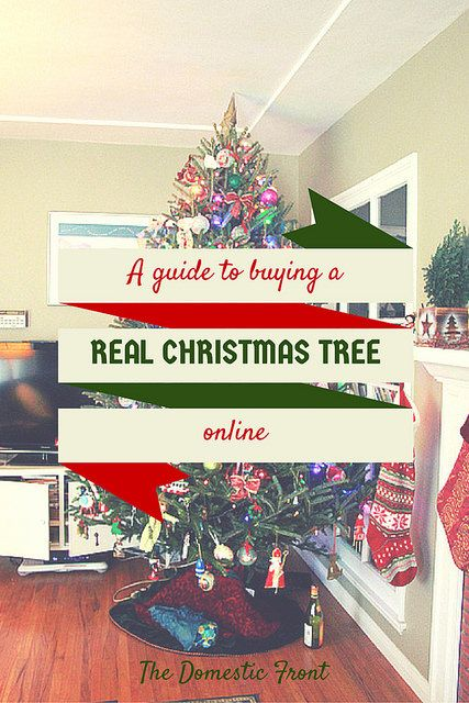 Where to Buy your Real Christmas Tree Online | Christmas trees ...