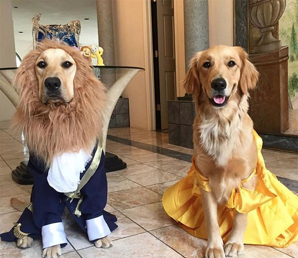 Beauty And The Beast Halloween Dog Costumes Disney Dog Costume