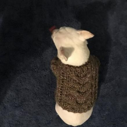 Knitting patterns cardigan free lion brand 64 ideas # ...