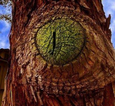 Unbelievable Tree