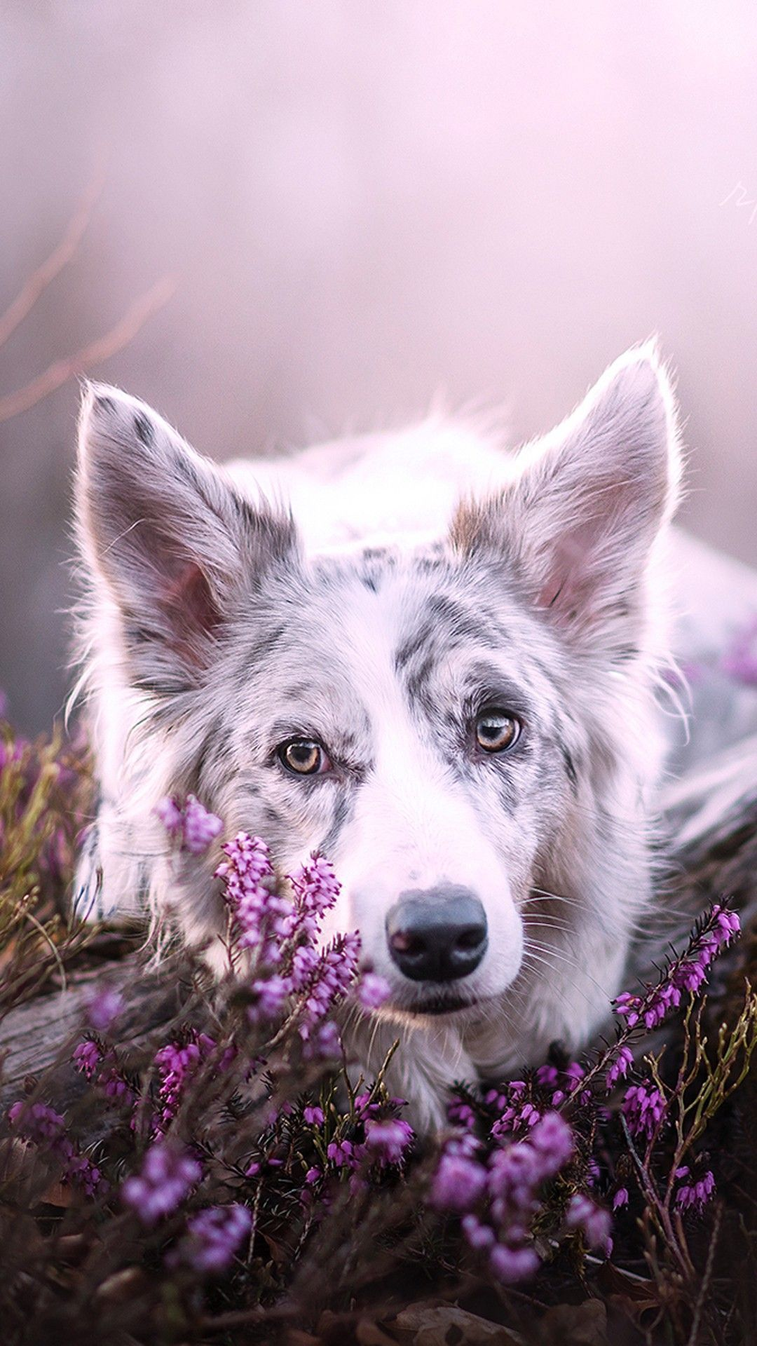 Dog Wallpapers Are Added Beautiful And Cute Dogs For Your Mobile Phone Follow Us On Facebook For More Beautiful Wallpapers Dog Background Cute Dogs Animals