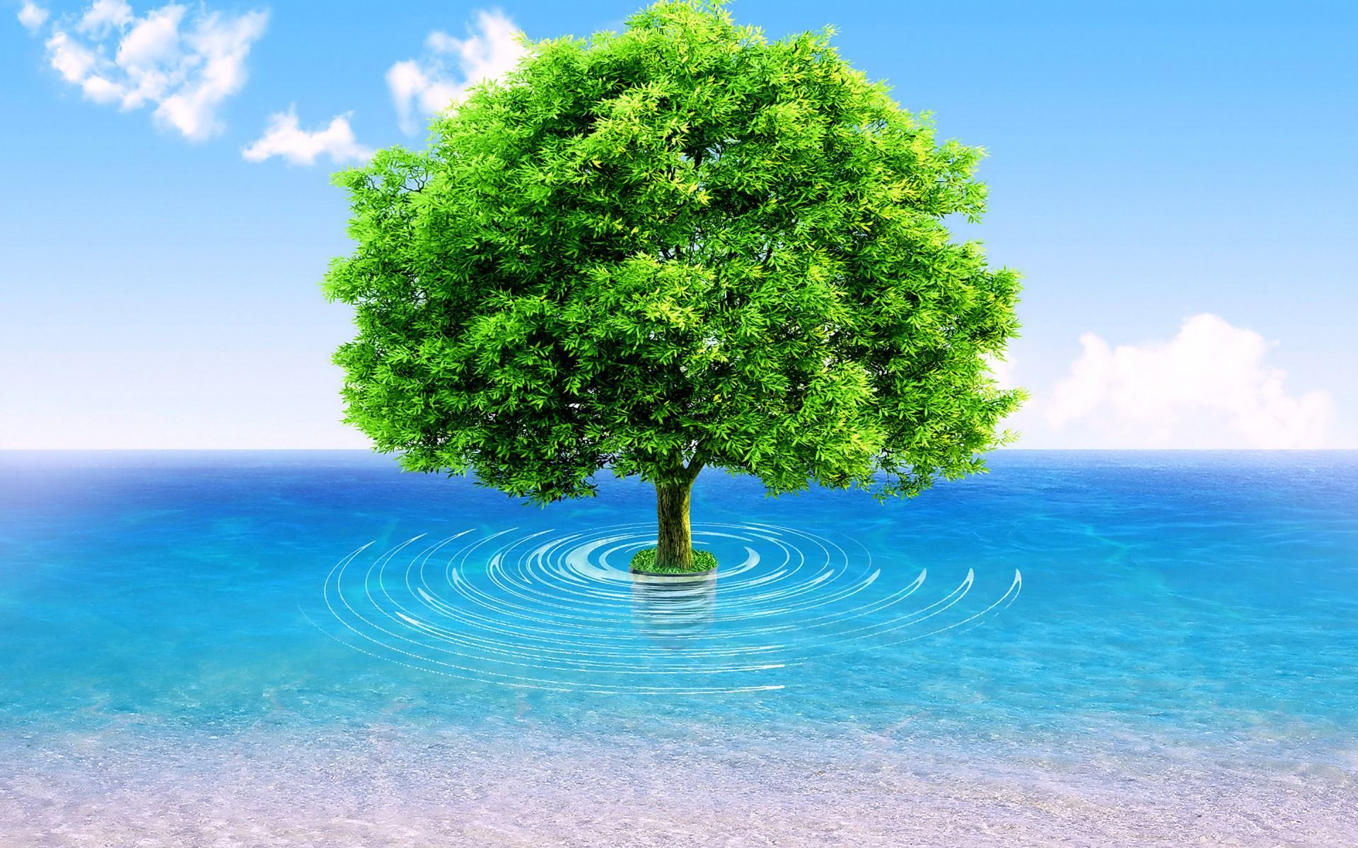 Ocean Tree wallpapers | Ocean Tree stock photos