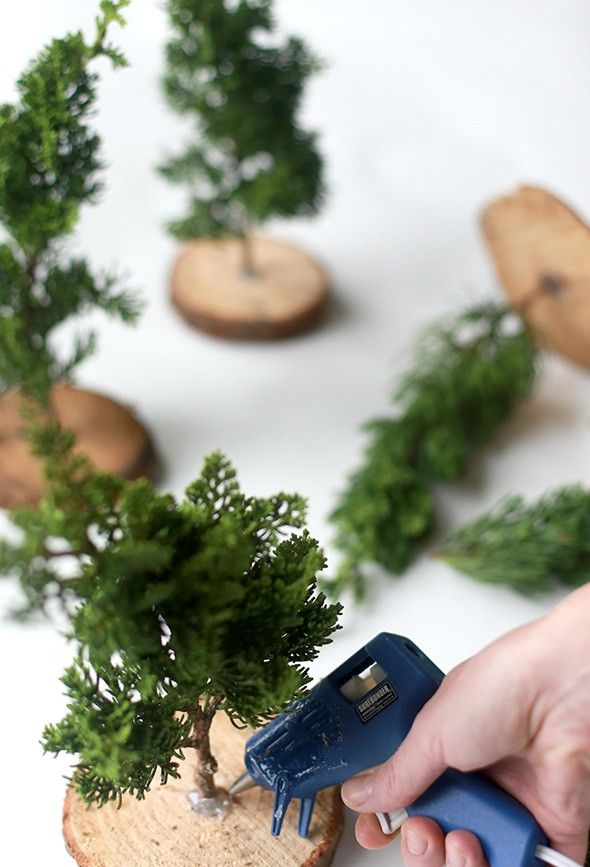 live cuttings as mini christmas tree decor glue gun wood cookie with drilled hole and cuttings from evergreens - Live Mini Christmas Tree